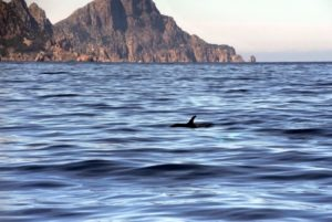 Alpana promenade excursions en mer Scandola girolata porto en bateau